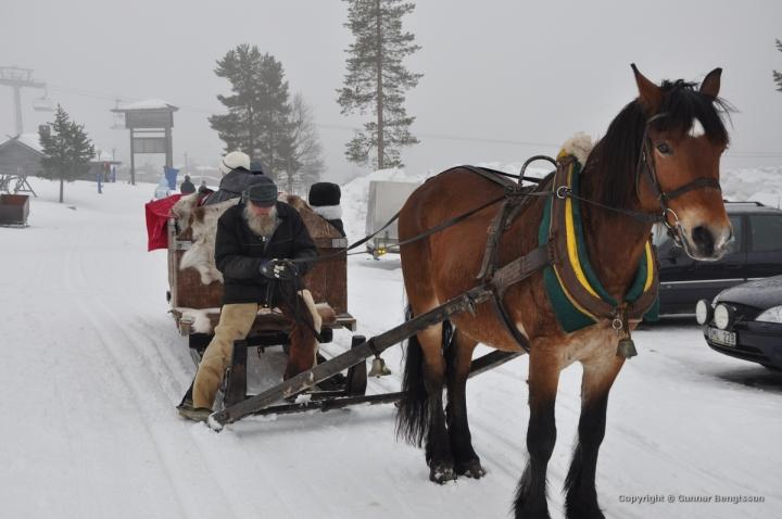 22/365 (tema 115: Häst)